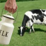 По данным США молоко на Украине скоро будет в дефиците