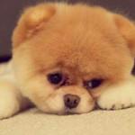 В Киеве парень ради девушки похитил дорогую собаку
