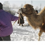 Когда Россию укреплять уже нечем, сгодятся и пять верблюдов