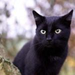 В Киеве нелюди изувечили породистого кота