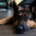 Собака помогла выйти хозяину из комы