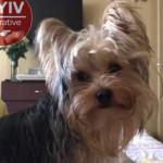 В Киеве грабители не ограничились деньгами и украли собаку