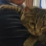 На заседание в законодательном собрании в Свердловской области принесли кота