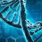 Учёные: Человека из обезьяны сделал особый ген