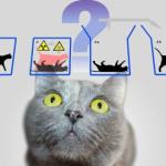 Ученые нашли способ «спасти» кота Шредингера