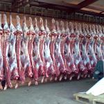 Всемирный банк выделит Казахстану $500 млн на развитие мясного животноводства