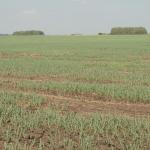 Над Францией нависла угроза засухи