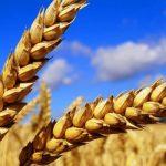 Коррупционные чиновники покидают свои посты в аграрном секторе